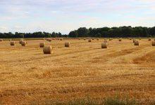 Photo of Większość gospodarstw rolnych nie przynosi zysku!