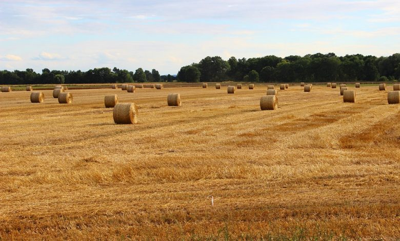 Photo of Coraz mniej mieszkańców wsi zajmuje się rolnictwem