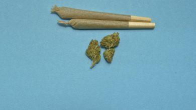 Photo of 3,2 miliona dolarów w jeden dzień, czyli legalizacja marihuany w USA