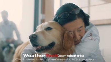 Photo of 6 milionów za reklamę… z podziękowaniem za uratowanie psa