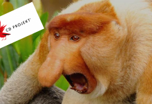 Photo of Gry CD Projekt warte więcej niż paliwo?!