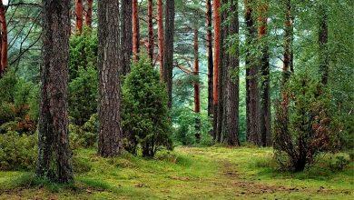 Photo of Już ponad kilkaset tysięcy osób domaga się cofnięcia zakazu wstępu do lasu
