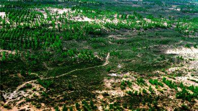Photo of Zamiana pustyni w las? Takie rzeczy tylko w Chinach