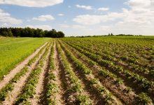 Photo of Biotechnologie sposobem na suszę w rolnictwie