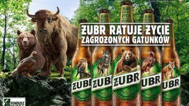 Photo of Żubr kupi dla Białowieskiego Parku Narodowego ambulans i drona, bo w sumie może!