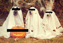 Photo of Areszt za obchodzenie Halloween? Ludzie mają różne pomysły, a Sejm musi się tym zająć