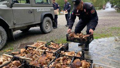 Photo of Włochy: Straż Leśna kontroluje grzybiarzy i konfiskuje im grzyby