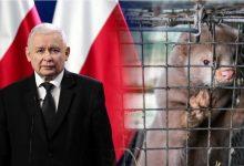 """Photo of PiSowska ,,Piątka dla zwierząt"""": zakaz hodowli na futra, ograniczenie uboju rytualnego…"""