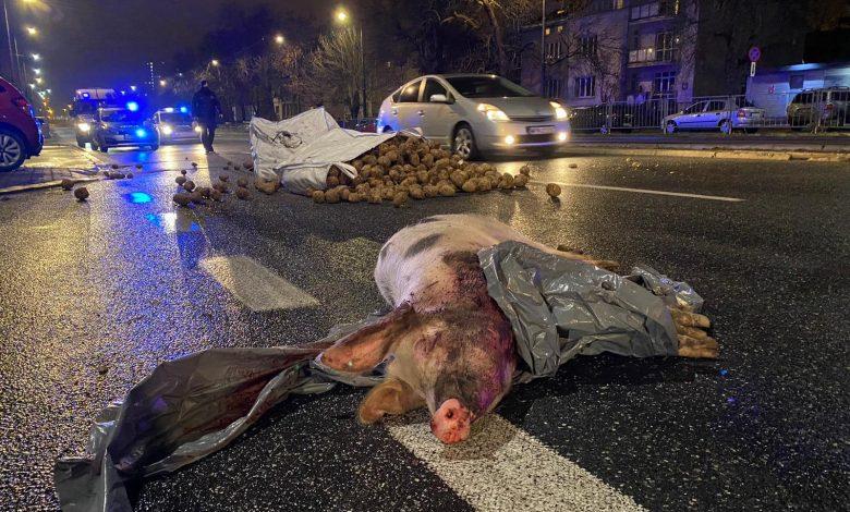 Photo of Rolnicy podrzucili Kaczyńskiemu świnię. No i jaja, kapustę i ziemniaki