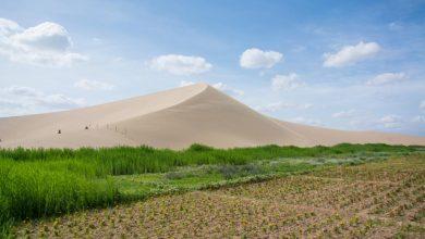 Photo of W Afryce powstaje Wielki Zielony Mur! Gigantyczny ekologiczny projekt!