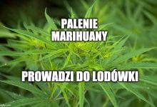 Photo of Legalizacja marihuany w Polsce? Ten projekt może zmienić wszystko