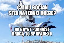 Photo of Polskie bociany w drodze do kraju. Miliony z nich ginie przez tubylców