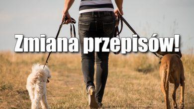 Photo of Wychodzisz z psem na spacer? Od 10 kwietnia będziesz mieć problem