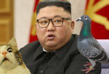 Photo of Kim Jong-un wypowiada wojnę gołębiom i kotom. Co przeskrobały?