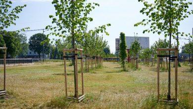 Photo of Łódź posadzi 20 TYSIĘCY drzew przy dwupasmówkach