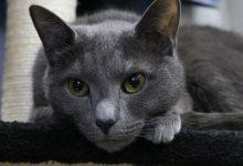 Photo of Tajwan: Furia społeczeństwa po decyzji o eutanazji 154 kotków z przemytu