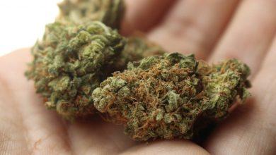 Photo of Medyczna marihuana zniknęła z polskich aptek! URPL nie wydaje zgód!