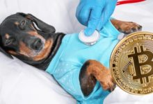 Photo of Salwador zbuduje nowoczesną klinikę dla zwierząt za kasę z Bitcoinów